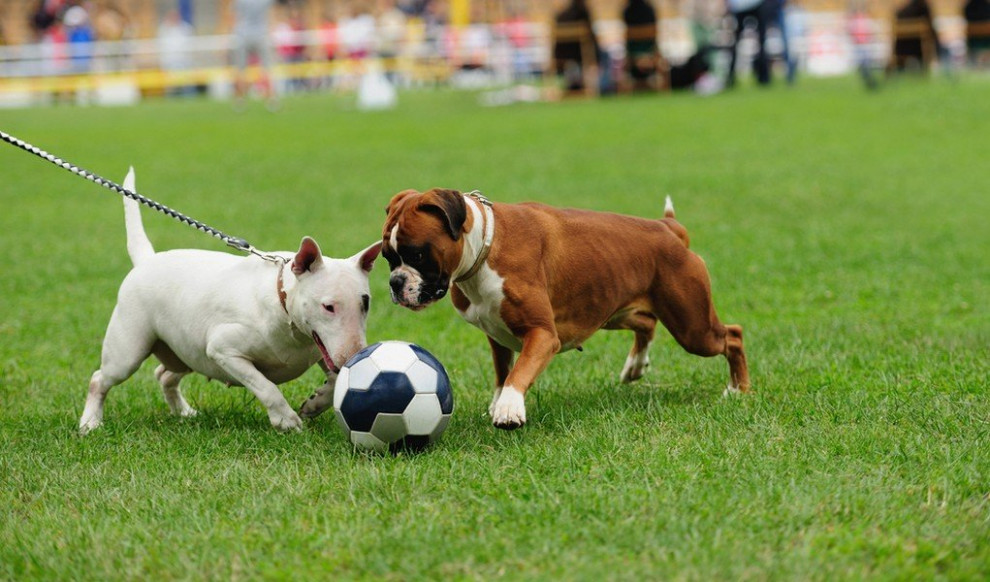 10 Best Sports to Do with Your Dog – Top Dog Tips - dog food recipes with chicken