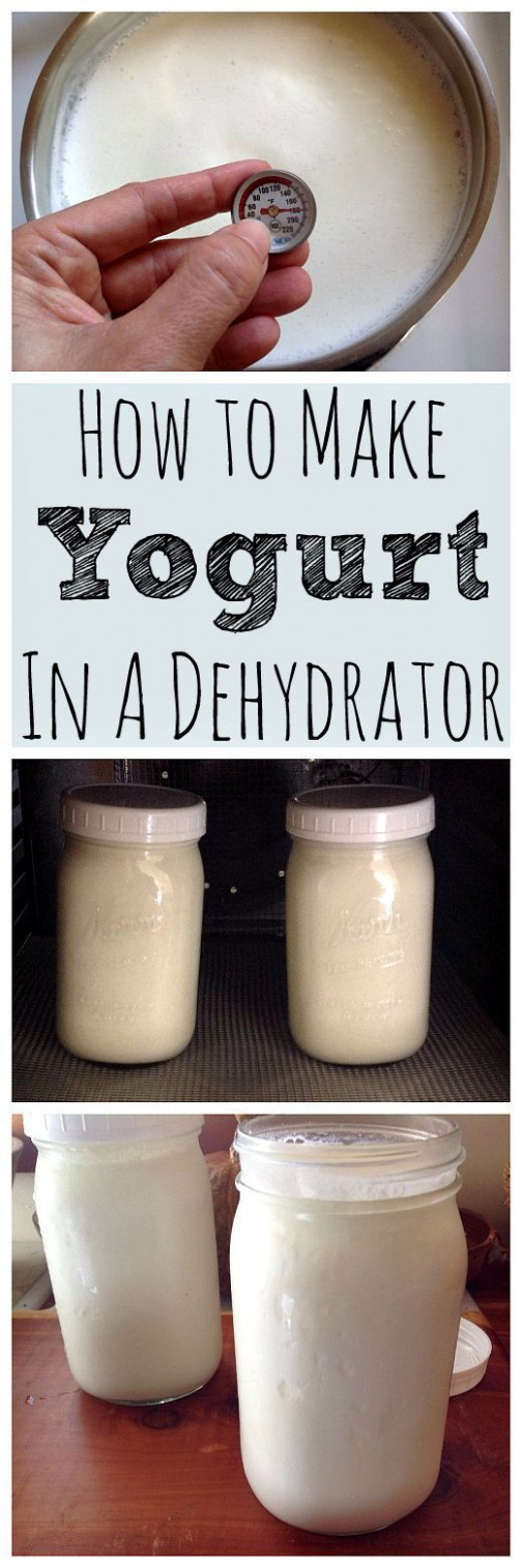 10 Perfectly Delicious Dehydrator Recipes You Will Want To Try - Food Dehydrator Recipes