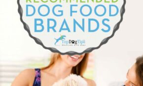 11 Vet Recommended Dog Food Brands That Are Inexpensive (11) – Homemade Dog Food Recipes Vet Approved