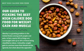 13 Best Dog Foods (High Calorie) To Gain Weight And Muscle ..