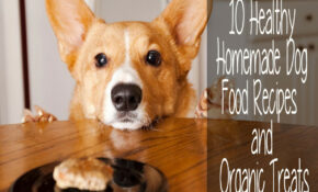 15 Healthy Homemade Dog Food Recipes And Organic Treats ..