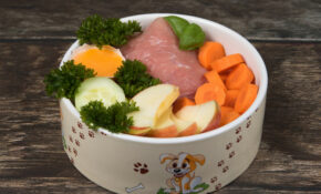 20 Pros And Cons Of Homemade Dog Food Recipes – Recipes Homemade Dog Food
