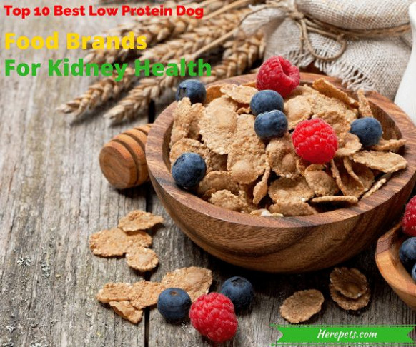 25+ best ideas about Low protein dog food on Pinterest ..