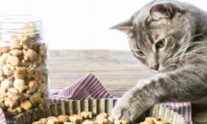 35 Homemade Pet Recipes Your Dogs And Cats Will Beg For – Recipes Kitten Food