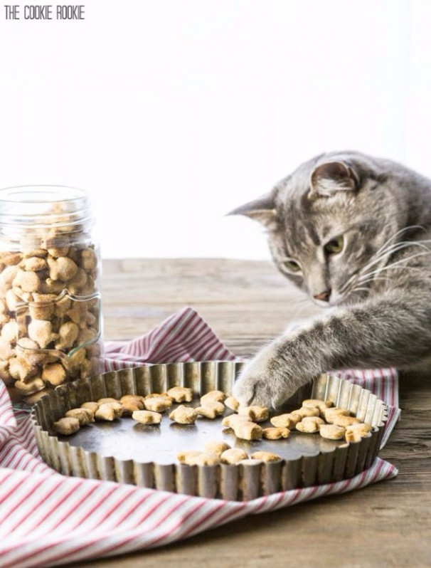 35 Homemade Pet Recipes Your Dogs and Cats Will Beg For - recipes kitten food