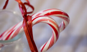 352/365 Candy Canes – Recipes Raw Food