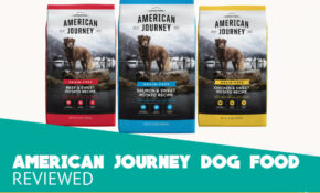 American Journey Dog Food Review - Top Recipes for 13