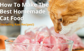 Best Homemade Cat Food Recipes | Raw Or Cooked, Make Your Own! – Homemade Cat Food Recipes
