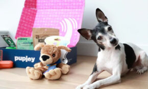 Best Pet Food Delivery Services – CNET – Recipes To Make Your Own Dog Food