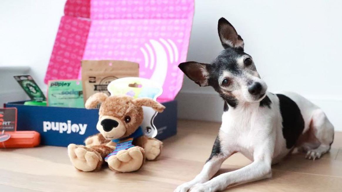Best Pet Food Delivery Services - CNET - Recipes To Make Your Own Dog Food
