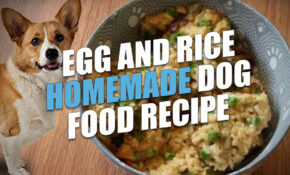 Egg And Rice Homemade Dog Food Recipe (Cheap And Healthy) – Recipes Dog Food