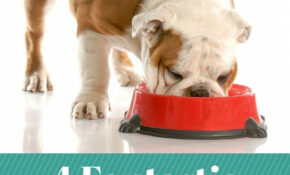 Fantastic Homemade Dog Food Recipes Your Pet Will Love   Dog ..