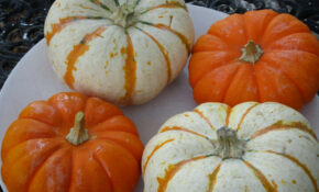 Festive Fall Dinner, Stuffed Baby Pumpkins, Washed & Ready To Prep – Dinner Recipes With Bacon