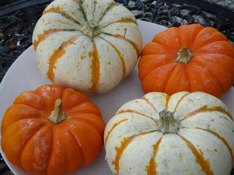 Festive Fall Dinner, Stuffed Baby Pumpkins, Washed & Ready to Prep - recipes thanksgiving dinner