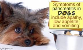 Food Recipes For Dogs With Pancreatitis – Food Recipes For Dogs