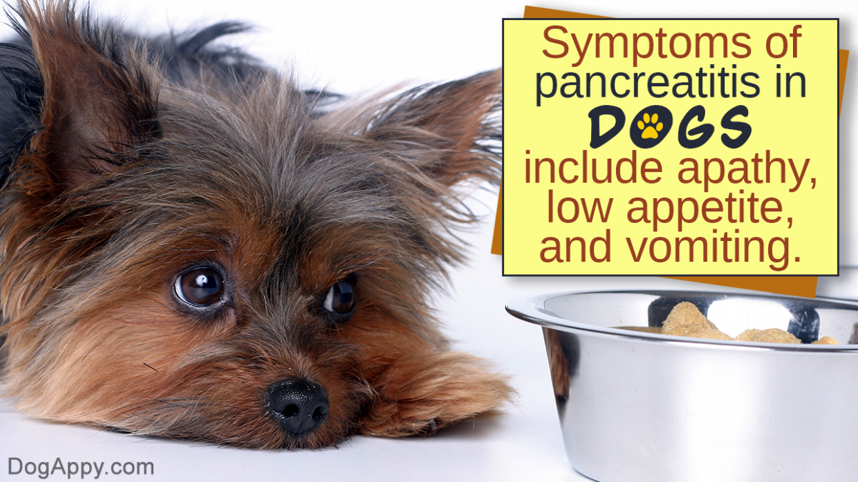 Food Recipes for Dogs with Pancreatitis - food recipes for dogs