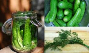 Foodista | 5 Must Read Blog Posts: Pickling And Preserving – Chicken Recipes Mexican