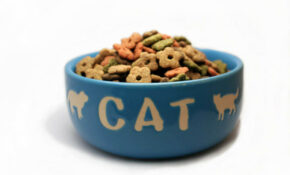 Homemade Cat Food Recipes – CDKitchen – Recipes Homemade Cat Food