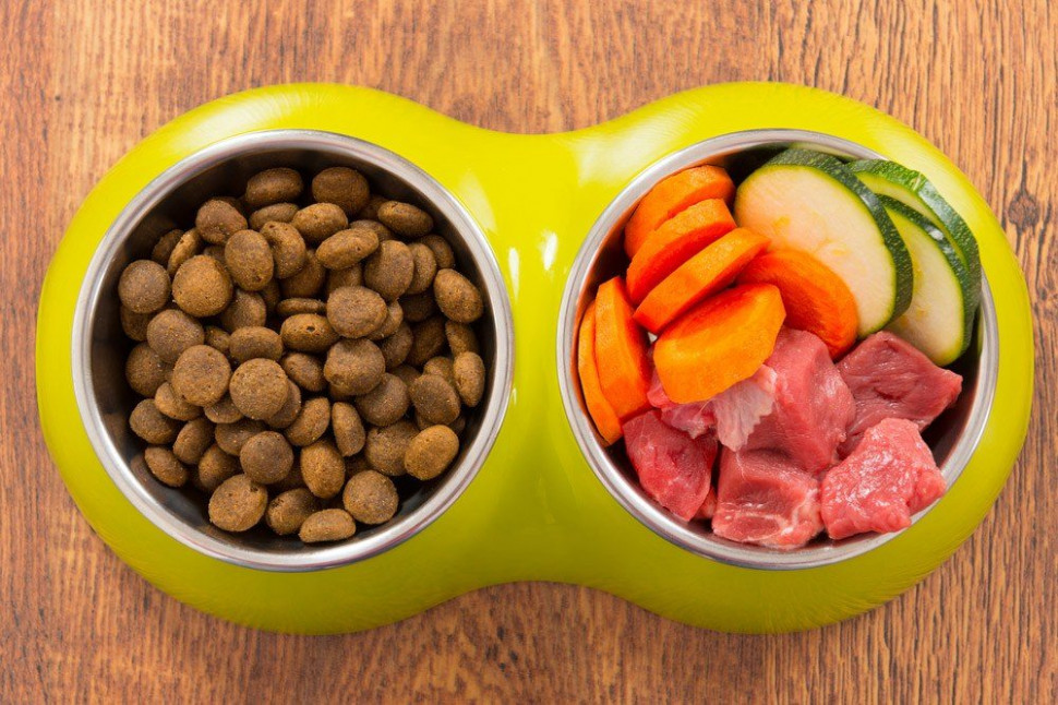 Homemade Cat Food Recipes For Sensitive Stomach And ..