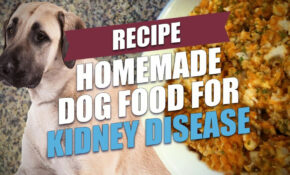 Homemade Dog Food For Kidney Disease Recipe (Simple And Cheap) – Healthy Recipes Kidney Disease