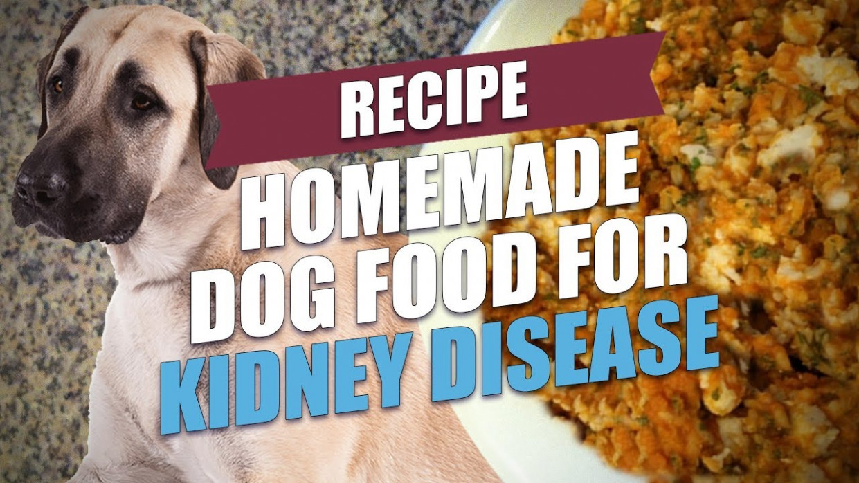 Homemade Dog Food for Kidney Disease Recipe (Simple and Cheap) - healthy recipes kidney disease