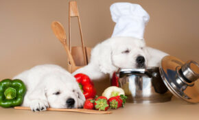Homemade Dog Food Recipes - The Best Way To Make Your Doggy Diet