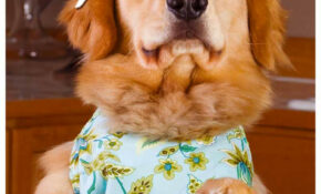 Homemade Dog Food Recipes – The Best Way To Make Your Doggy Diet – Recipes To Make Your Own Dog Food