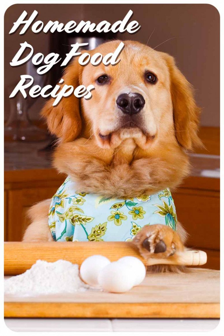 Homemade Dog Food Recipes - The Best Way To Make Your Doggy Diet - recipes to make your own dog food