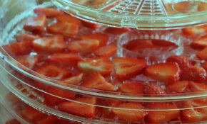 How To Dehydrate Strawberries – Dehydrated Food Recipes
