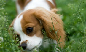 Keeping Dogs From Eating Plants | ThriftyFun – Dog Food Recipes