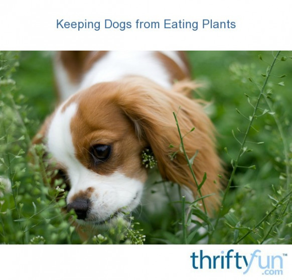Keeping Dogs From Eating Plants | ThriftyFun - Dog Food Recipes