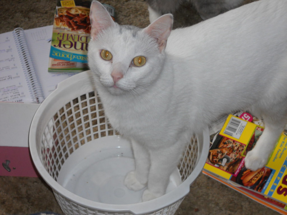 More Helping From Bobbert - recipes homemade cat food