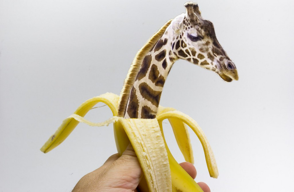 New born baby giraffe from an banana hatched ? [Baby–Giraffe aus einer Banane geschlüpft] - recipes with baby food