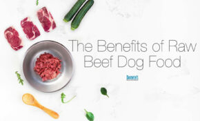 Nutritionally Balanced Raw Beef Dog Food – Darwin's Pet Food – Recipes Dog Raw Food
