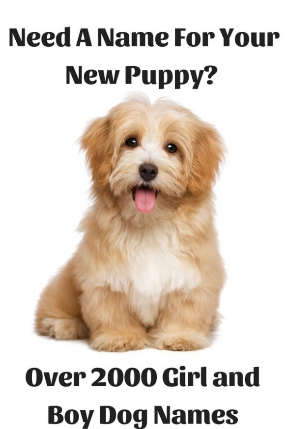 Over 2000 Of The Most Popular Cute And Unique Pet Names - Homemade Dog Food Recipes Vet Approved