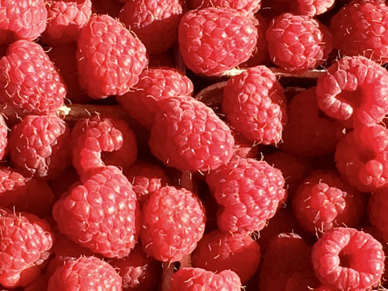 Raspberry, Fruit, Berries, Red, Sweet - Recipes Vegetarian Summer