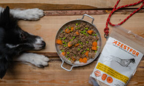 Recipes For Homemade Dog Food | Azestfor – Low Fat Dog Food Recipes