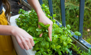 The 7 Easiest Herbs To Grow In An Apartment Garden ..