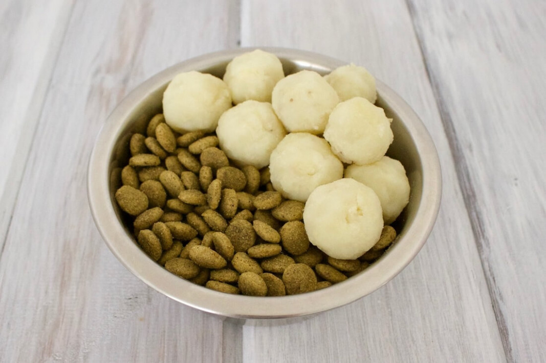 The Best Vegan Dog Food Brands and Homemade Recipes | The ..