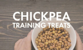 The Dog Chef – Dog Food, Pet Store, Rescue Dogs – Recipes To Make Your Own Dog Food