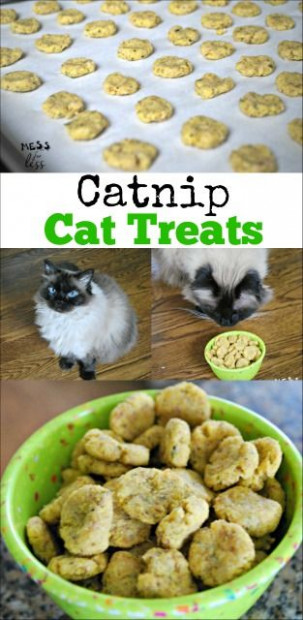 This catnip cat treats recipe is a hit with out cat. Easy ..