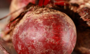 Well Doesn't That Beet All? – Warm Salad Recipes Vegetarian