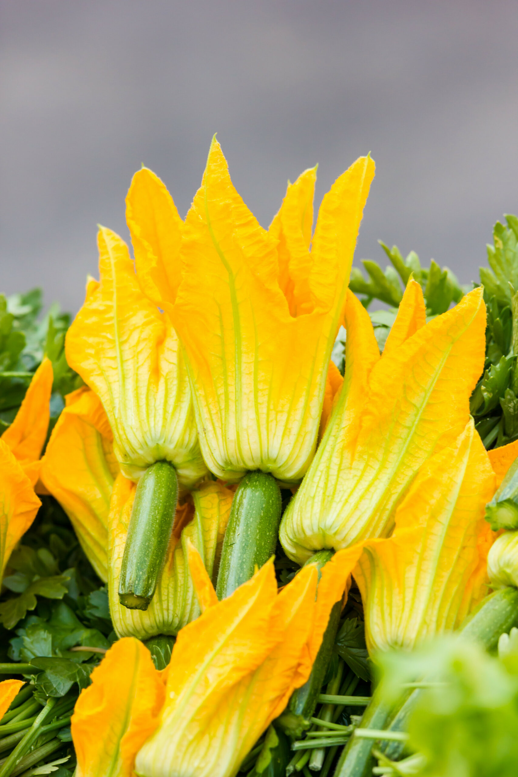 What You Need to Know About Squash Blossoms, the Flower We ..
