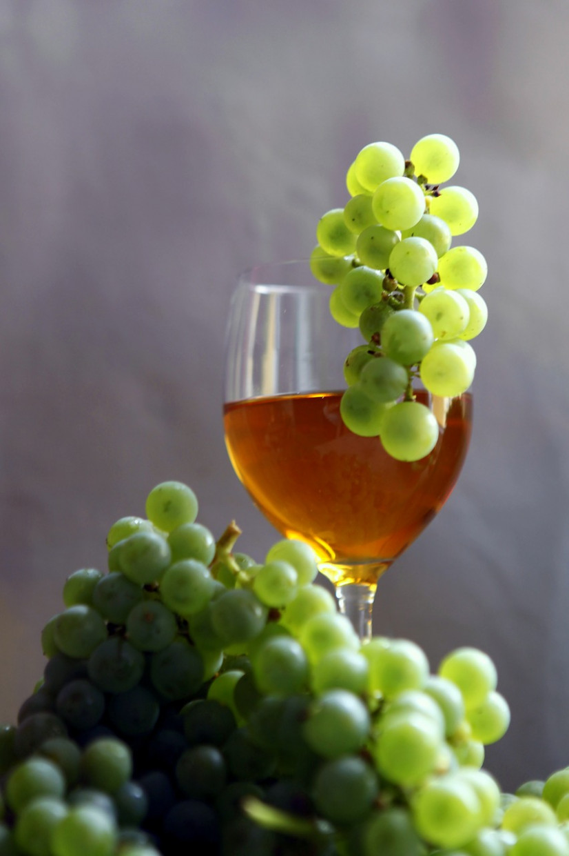 Wine, Vintage, Vines, Healthy Food - recipes light and healthy