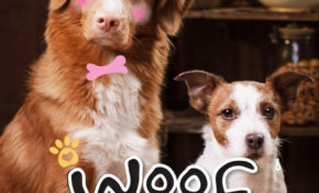 Woof Woof! Best Dog Food Recipes: A Cookbook Of Healthy ..